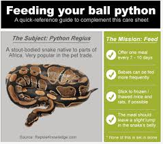 Ball Python Feeding Tips How To Feed Your Pet Snake