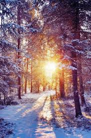 winter background iphone 6. Beautiful Iphone Winter Sunset Shining Through Forest Trees IPhone 6 Plus HD Wallpaper With Background Iphone