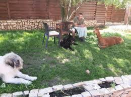 Marian Godina - Relaxare cu animale | Facebook