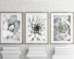 cactus prints set of 3 prints cacti succulent print botanical photography  on set of 3 wall art australia with australia scandi etsy