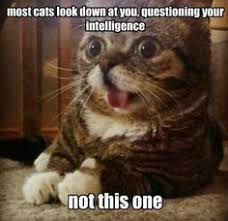 stupid cat stuff on Pinterest | Cats Doing Funny Things, Cats and ... via Relatably.com