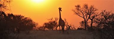 Kruger National Park Climate Chart Best Time To Visit Kruger National Park Climate Chart And