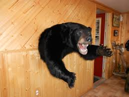 choose the team that specializes in black bears
