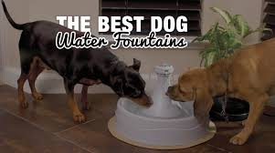 pet dog water fountain outdoor steel with 41 hose splitter included