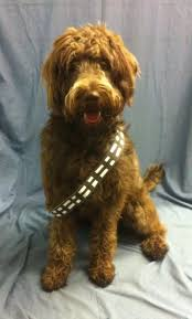 quick and easy chewbacca dog costume