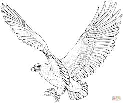 Small Picture Hawk Coloring Pages GetColoringPagescom