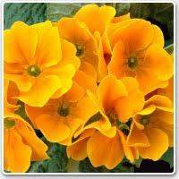 Imagini pentru flori frumoase de sera