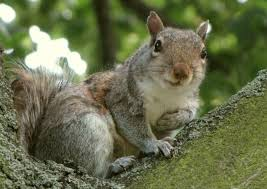 3 diy squirrel repellents that can be prepared at home