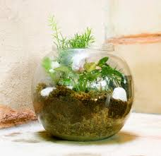 Glass Bowl Decoration Ideas ozziesterrariums Your personalized little gardens in glass 60
