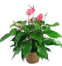 house plants pictures and names beauteous strikingly common
