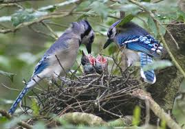 bird printables and bird activities for