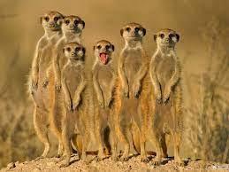 Cute Animals Desktop Wallpapers ...