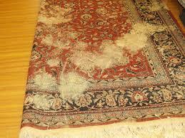 image of oriental rugs austin