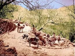 Resultado de imagen para arrieros de mulas