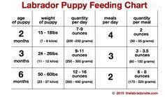 Lab Puppy Food Chart 10 Best Animals Images Pets Cutest Animals Doggies