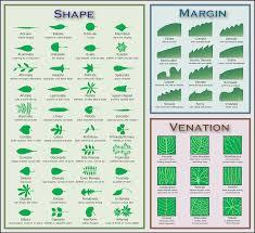 File Leaf Morphology No Title Png Wikipedia