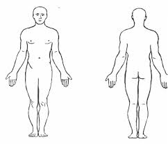 For The Human Head Which Direction Is Anterior And Which
