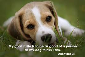 Beautiful Animal Quotes Best of Beautiful Dog Quotes That Reiterates That Dogs Are Man's Best Friend