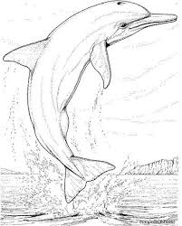 Small Picture Big Coloring Pages Of Animals coloring page dolphin Coloring