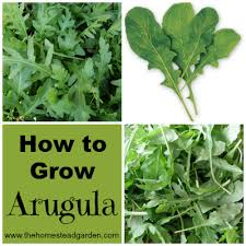 arugula collage