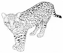 Small Picture Leopard coloring page Animals Town animals color sheet