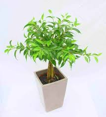 how to double pot and display plants