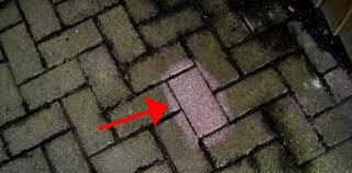 pet plant safe patio cleaner ph