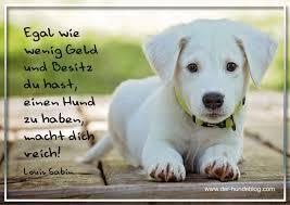 Der Hundeblog I Hundesprüche Und Zitate
