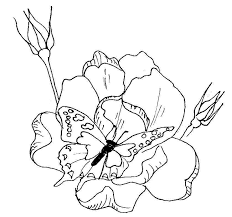 Small Picture FREE Butterfly Coloring Pages Butterfly on Roses