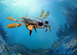 How Did Crabs Evolve Crabbiness Its Complicated