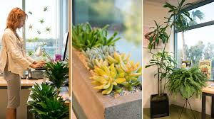 Office gardening Vertical Garden Gardening To 5 The Office Gets Plant Makeover The Horticult Gardening To 5 The Office Gets Plant Makeover The Horticult