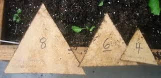 Lets Get Biointensive Root Simple