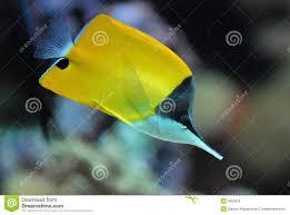 Pesci della barriera corallina fotografie stock libere da diritti