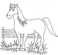 Disegni Da Colorare Di Cavallicavalli Da Colorare