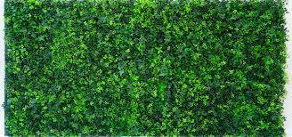 evergreen trees shrubs