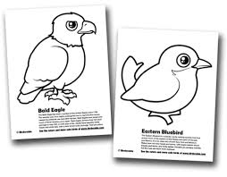 Bald Eagle Eastern Bluebird Coloring Pages In Eagles Coloring Pages