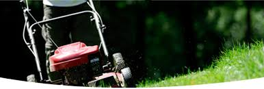 choose trugreen for the best lawn care available