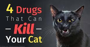 Tylenol And Cats Rome Fontanacountryinn Com