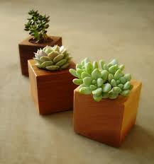 succulent garden planters in reclaimed wood