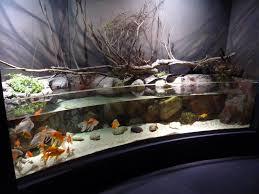 Amazing Aquarium Design Amazing Aquarium Home Design Futuristic Loversiq