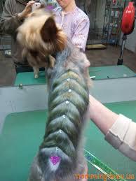 глиттер тату для собак и кошек стрижка и тримминг собаккотов