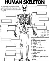 Small Picture 100 best Teaching Human Body Health images on Pinterest