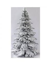 The Snow White Fir (5ft to 8ft)