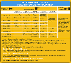 Dog Food Feeding Chart 24 Gigantic Influences Of Pedigree Dog Food Feeding