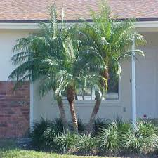Palm Tree Guide With Illustrations Of Different Types Of