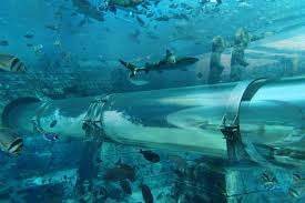 underwater water slide.  Slide Check Out This Amazing Video Of The Waterpark  Aquaventure Water Slide To Underwater Water Slide I
