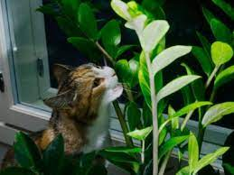 sauarding plants from cats how to