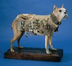 12 Year Us Dog Bite Fatality Chart The Dangerous Dog Debate American Veterinary Medical