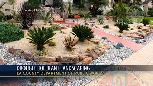 Small Picture PSA Drought Tolerant Landscaping YouTube