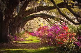 charleston sc magnolia plantation gardens memory lane